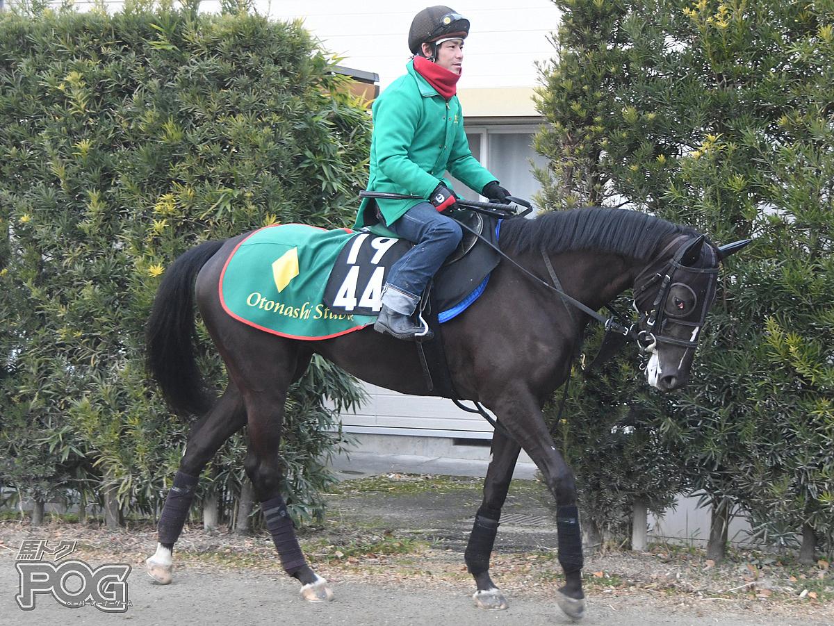 レッドオルティスの馬体写真