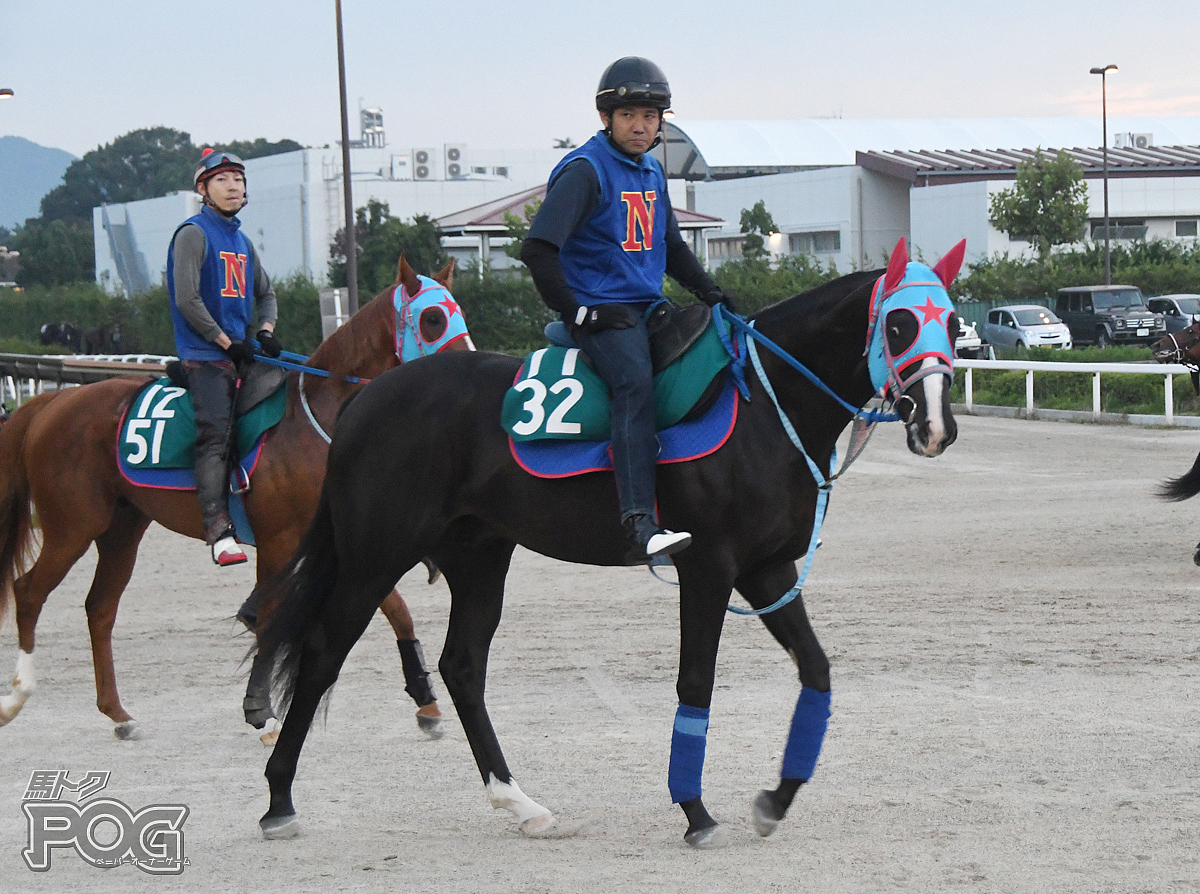 クロンプリンツの馬体写真