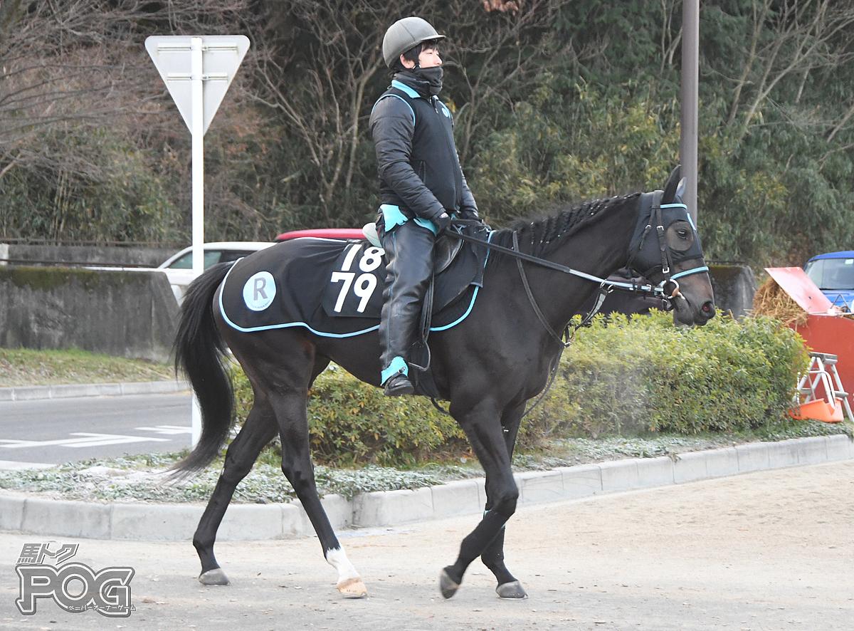 ディエルベの馬体写真