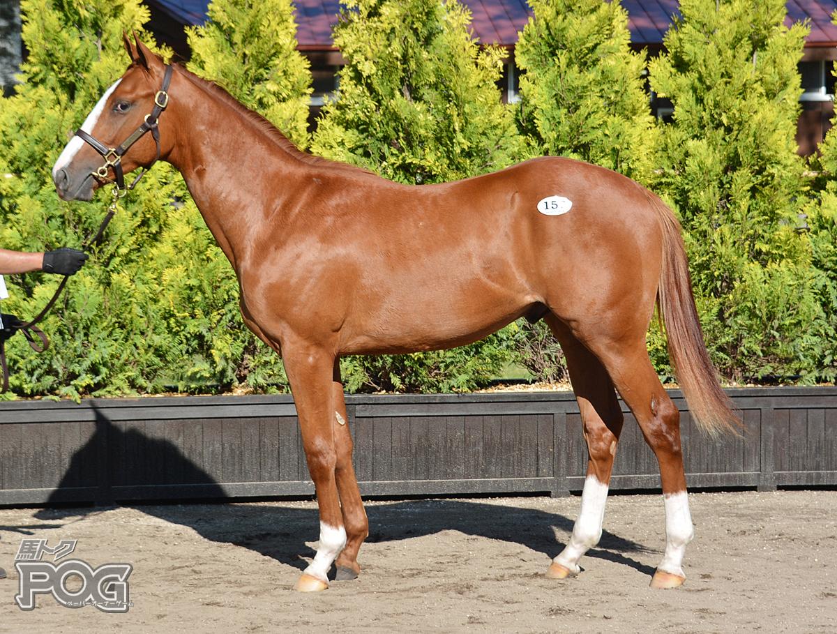 レヴァンテの馬体写真