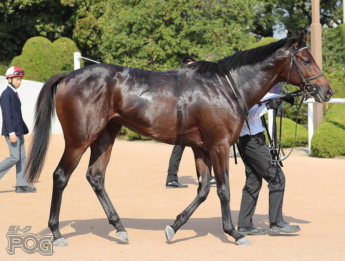 グレートタイムの馬体写真