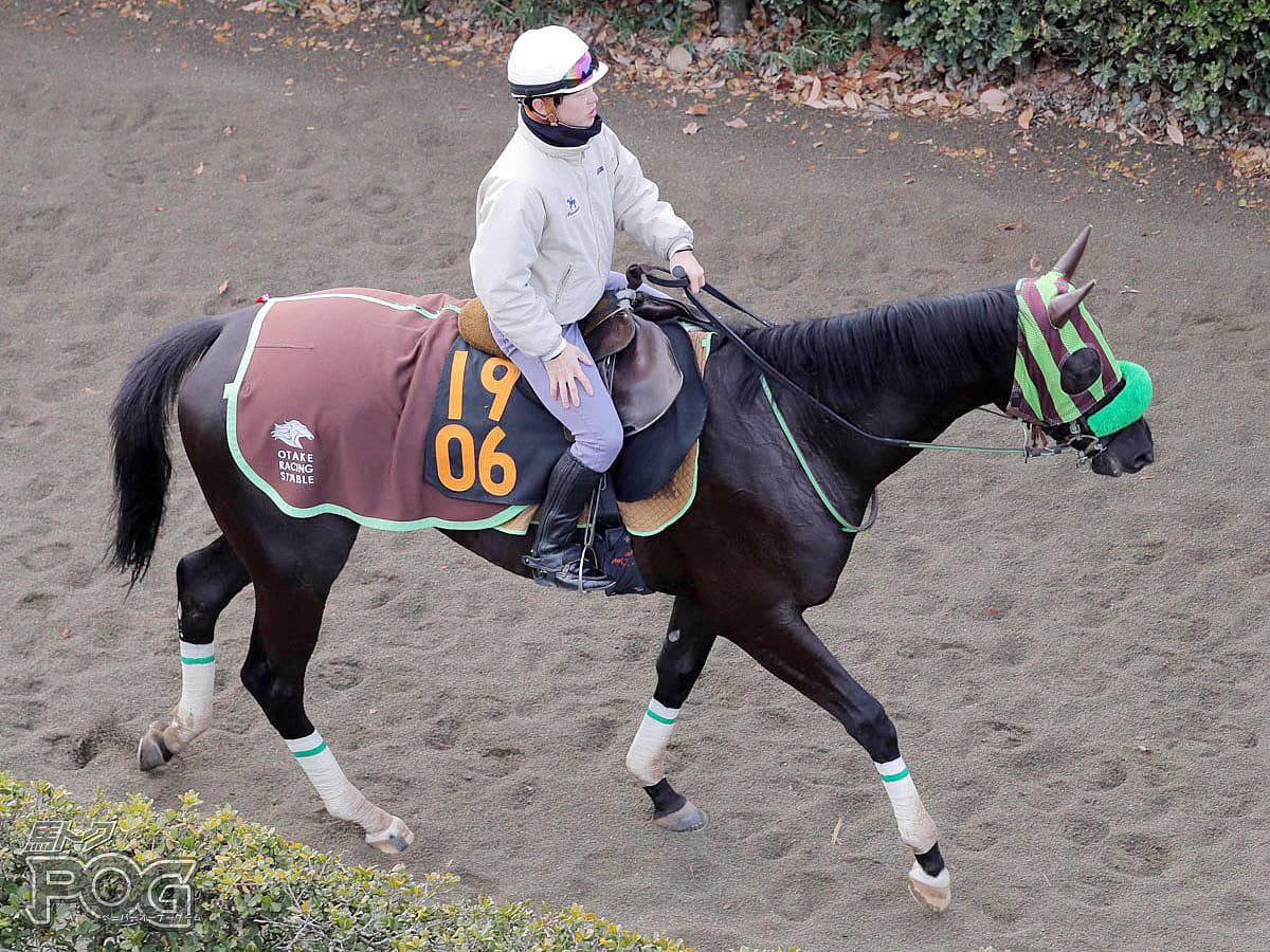 バスクインザサンの馬体写真