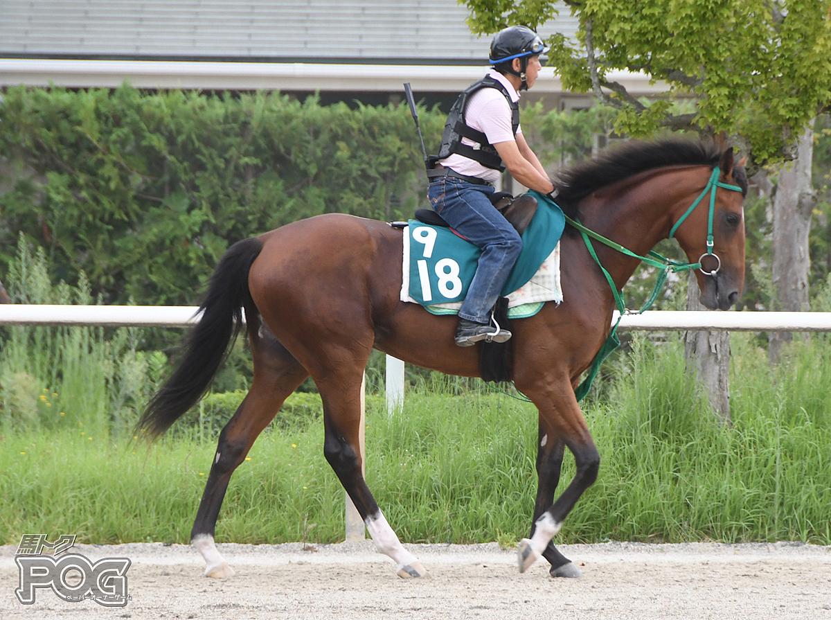 ケイティクレバーの馬体写真