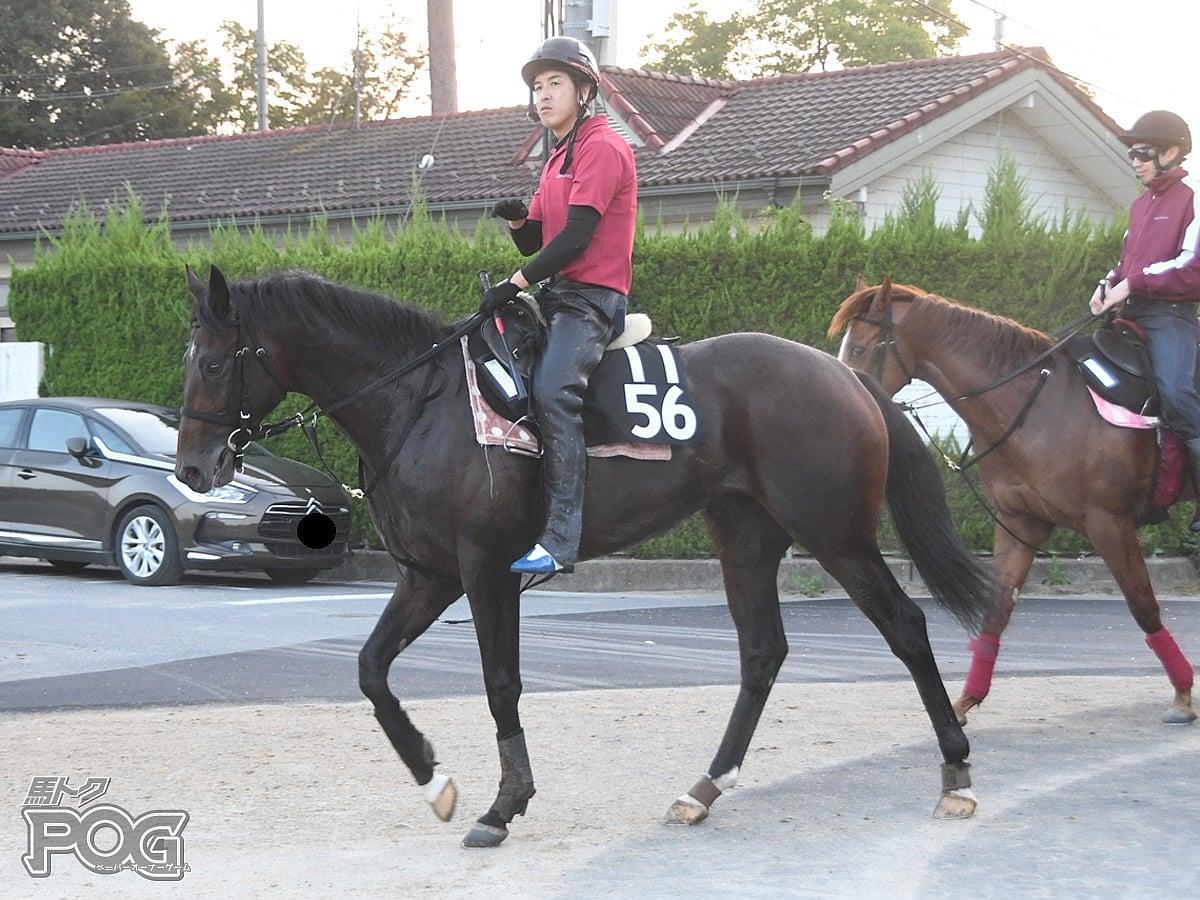 レッドアルディの馬体写真