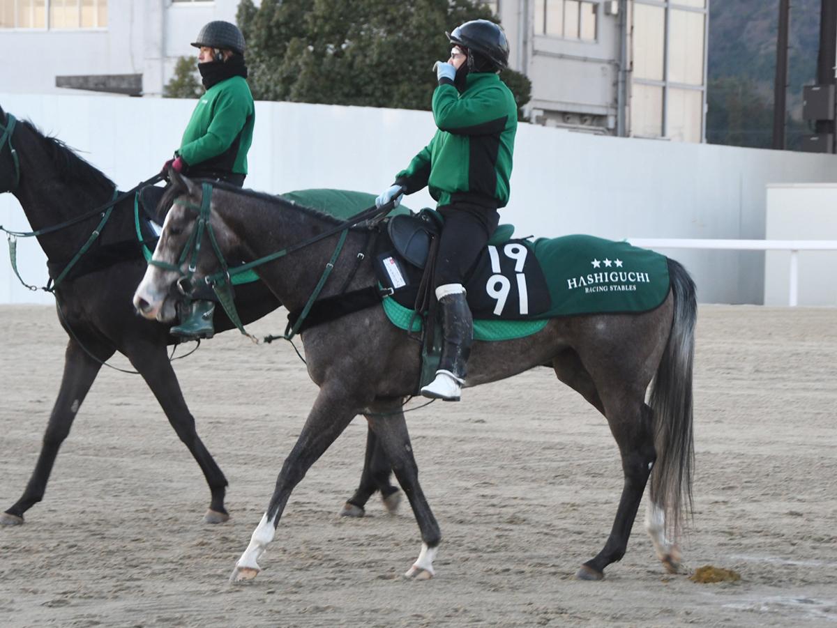 レーヌアグリュムの馬体写真