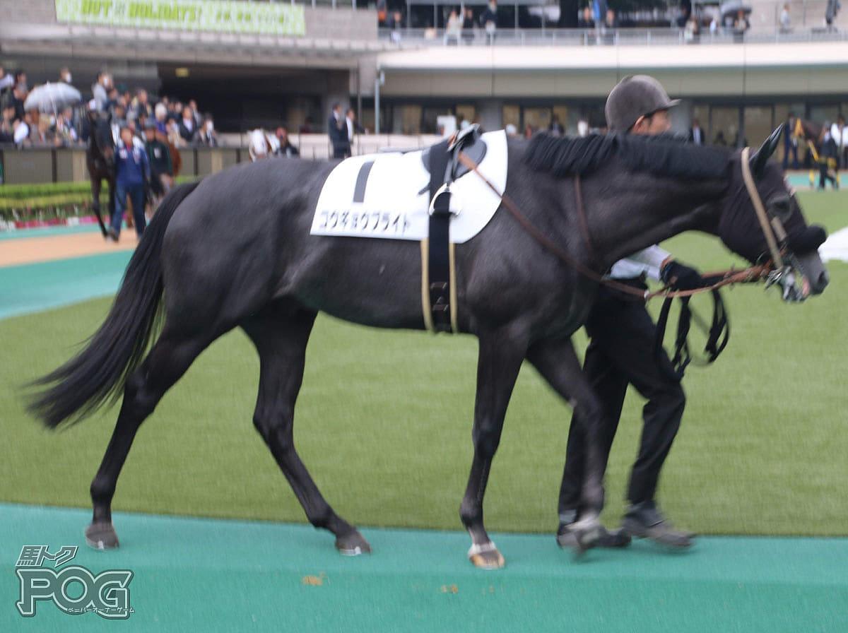コウギョウブライトの馬体写真