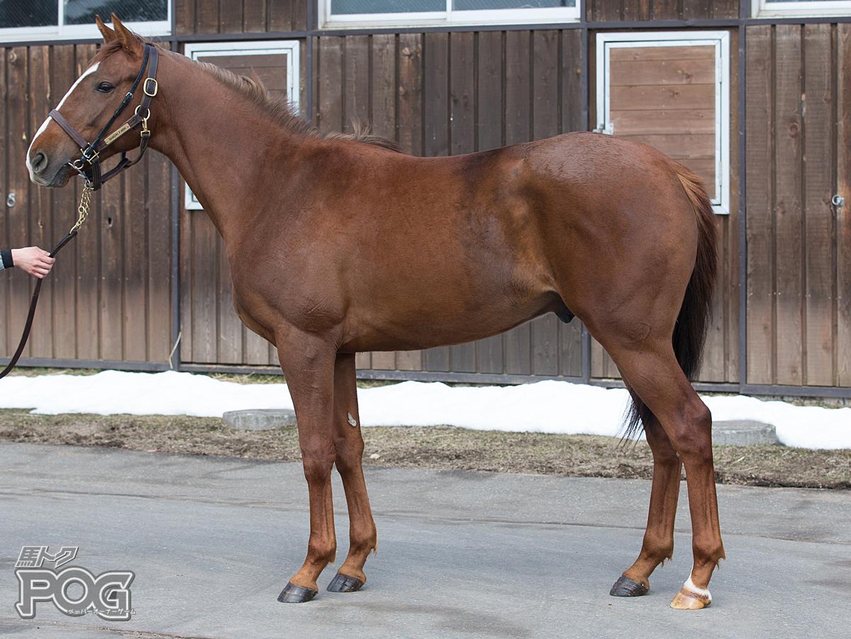 ラプトレックスの馬体写真
