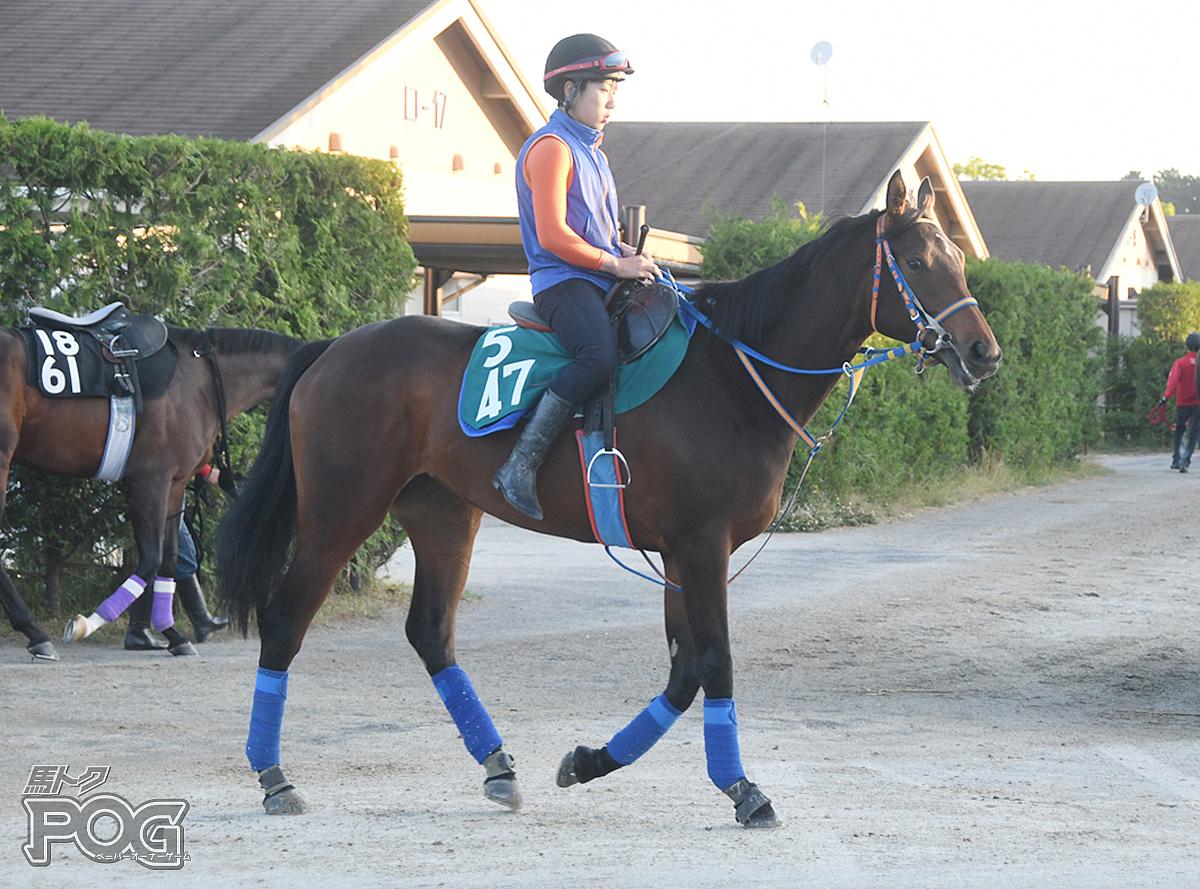 レッドヴァールの馬体写真