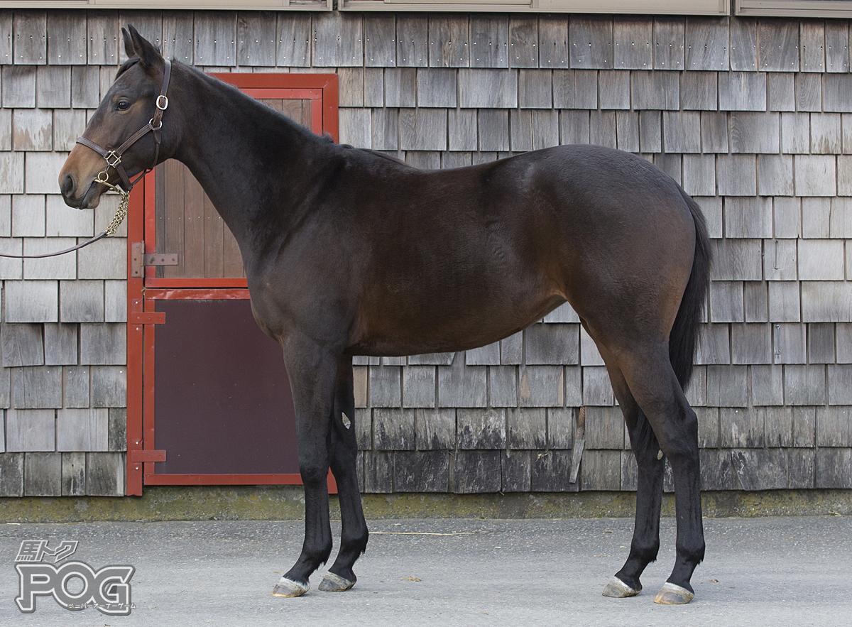 レッドテオドーラの馬体写真