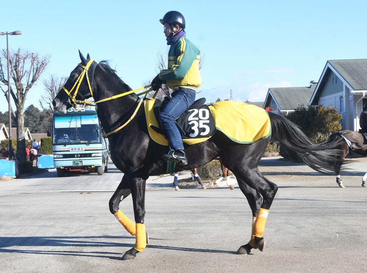 レッドフィオナの馬体写真