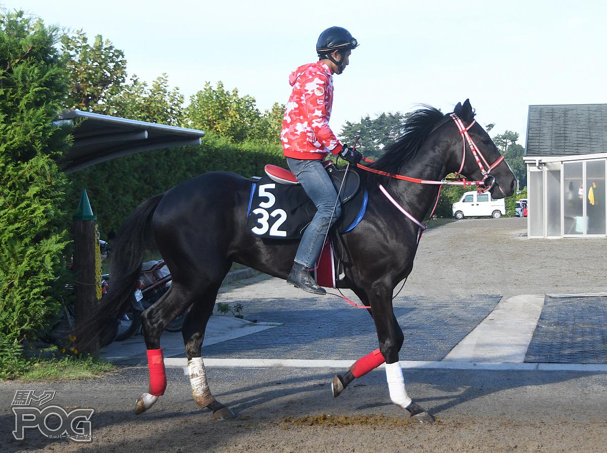 スペイシーの馬体写真
