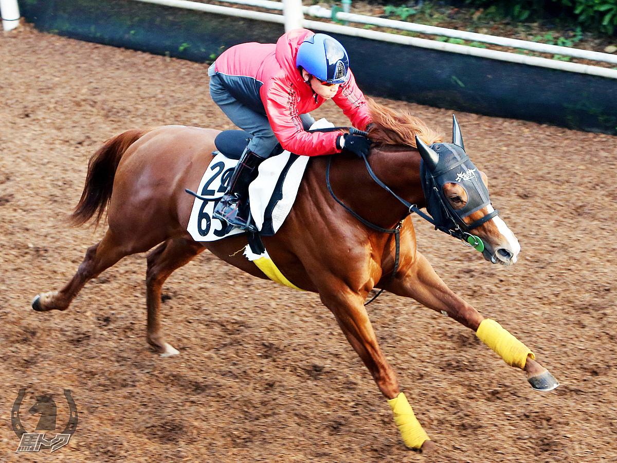 ハッピーグリンの馬体写真