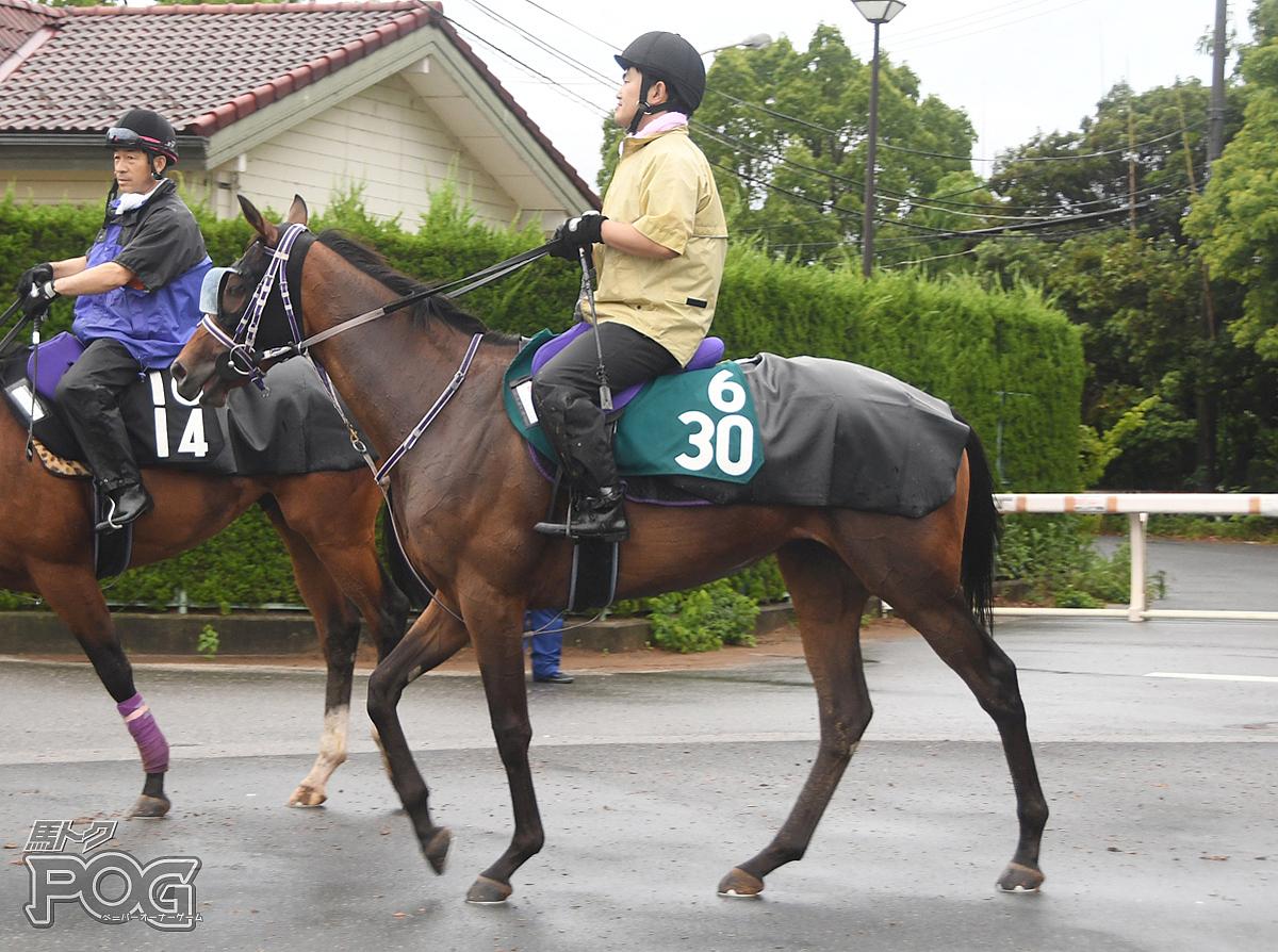アイランドクイーンの馬体写真