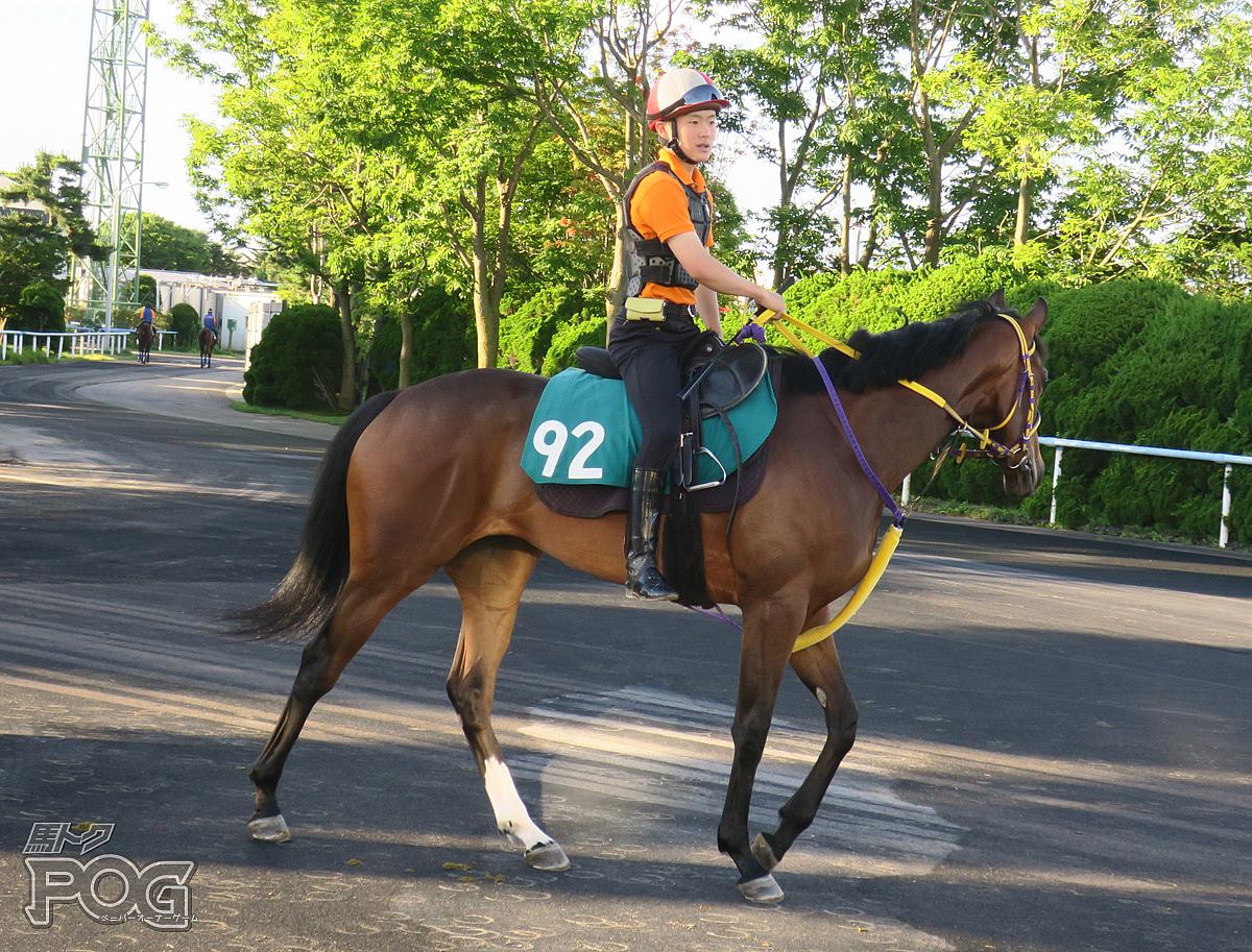 アドマイヤテンプウの馬体写真