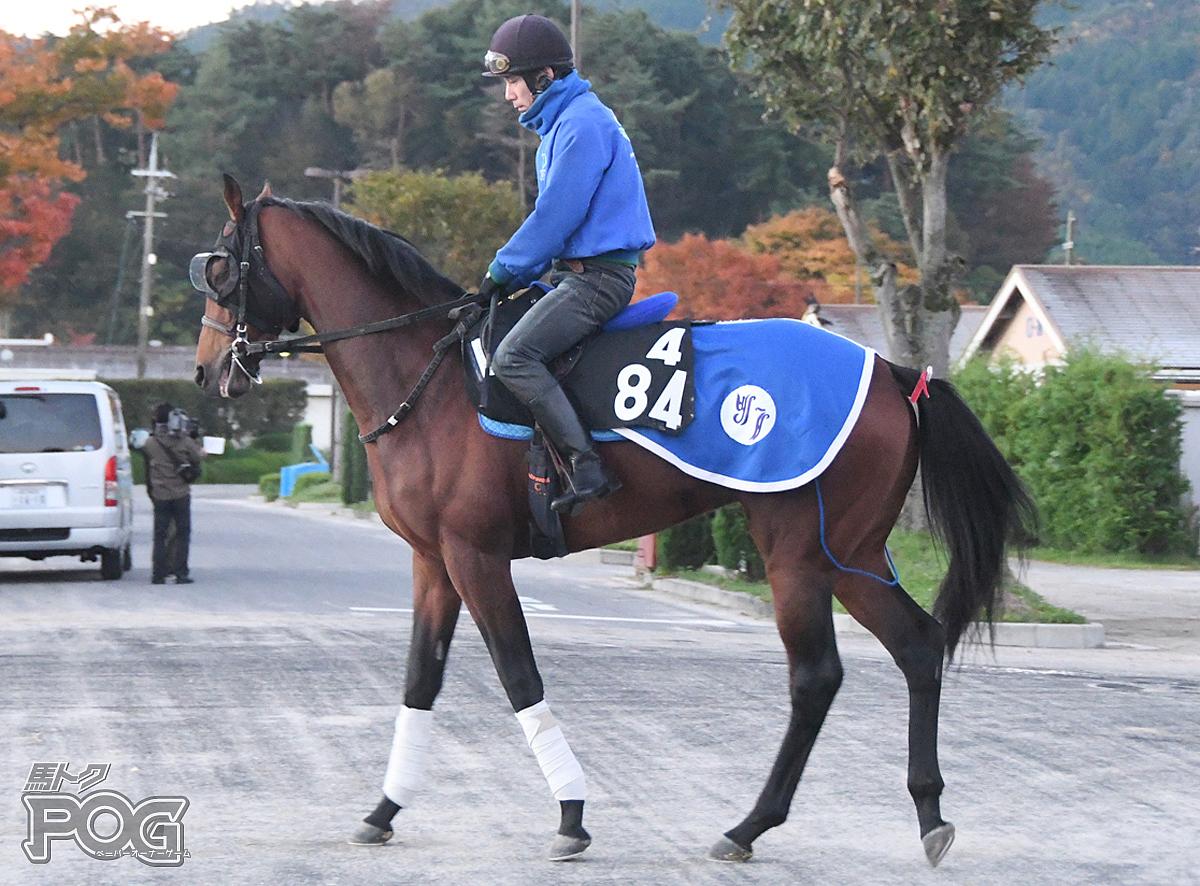 シルヴァンシャーの馬体写真