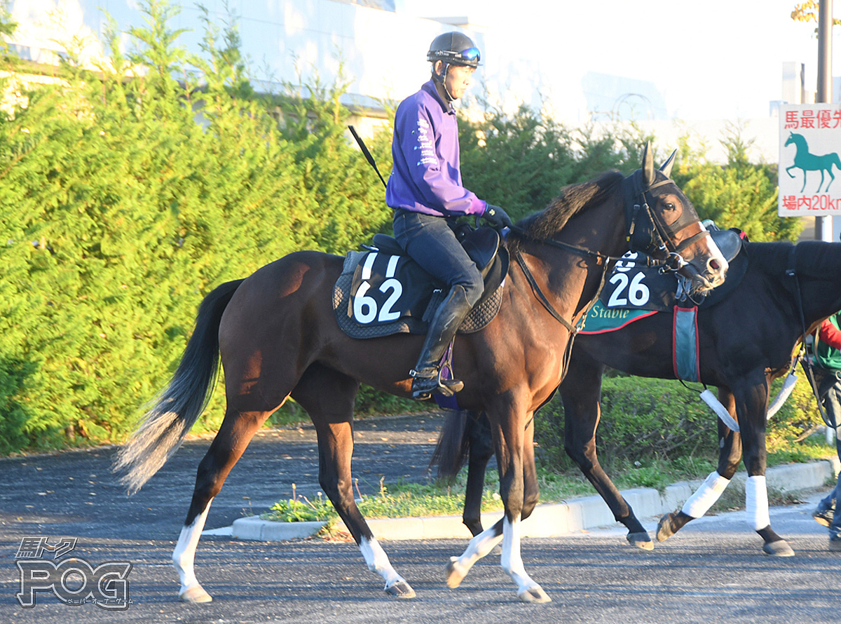 レッドプリモの馬体写真