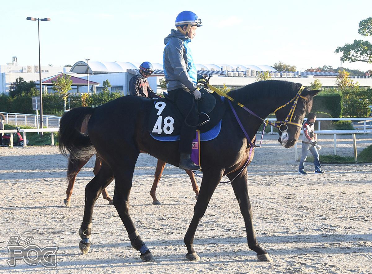 ポートフィリップの馬体写真
