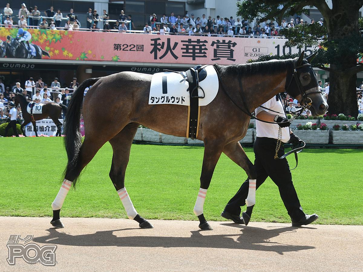 タングルウッドの馬体写真