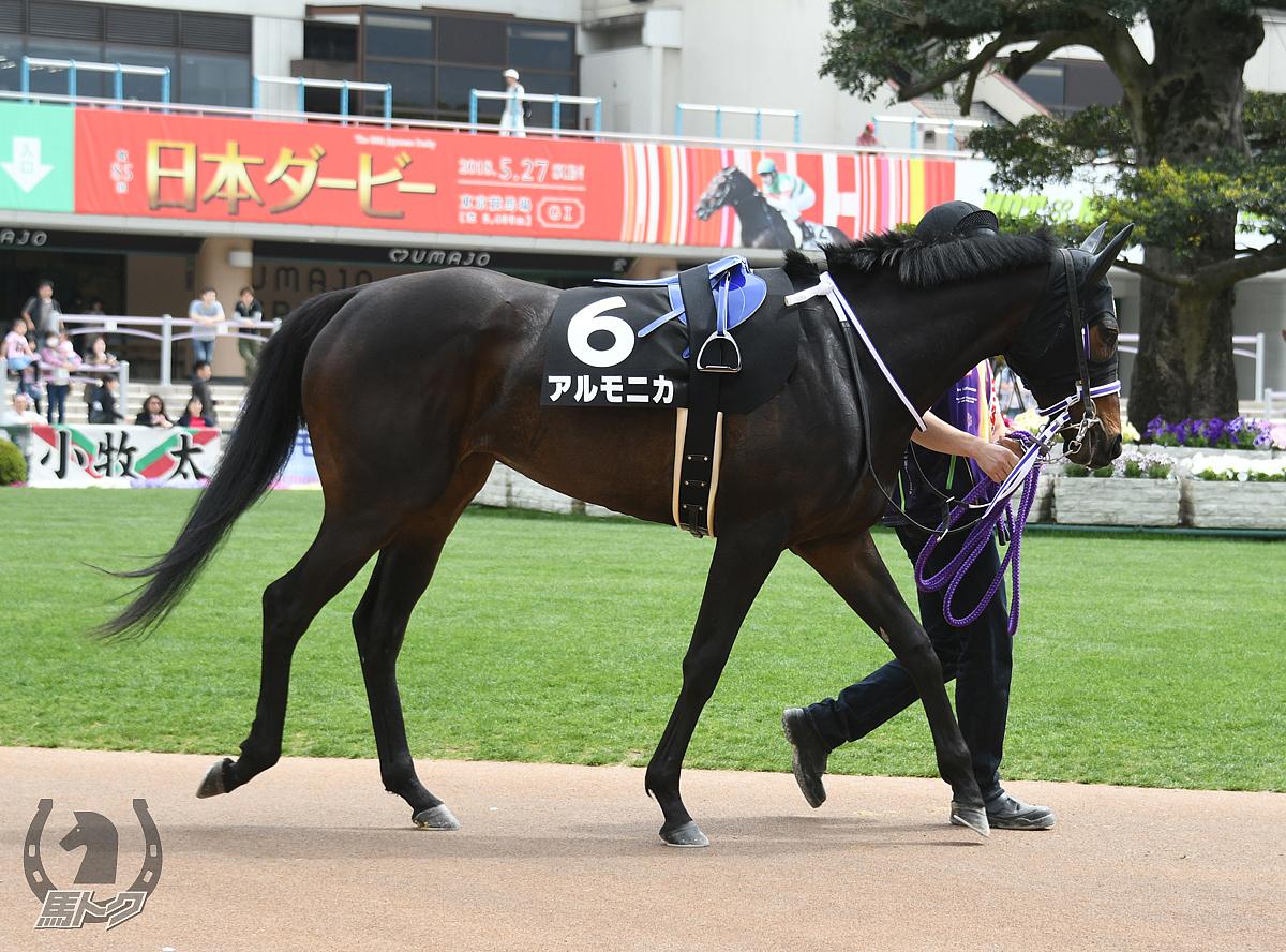 アルモニカの馬体写真