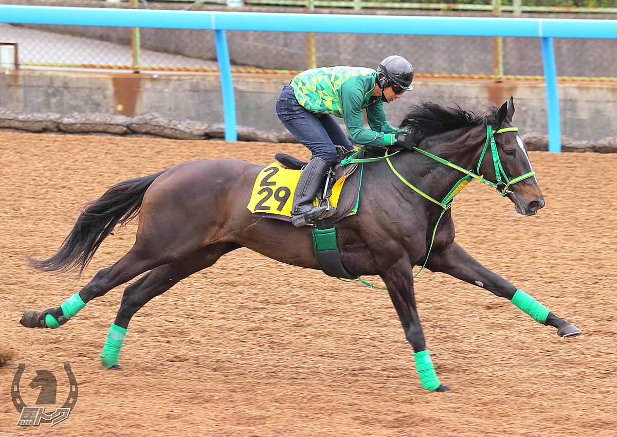 ウラヌスチャームの馬体写真