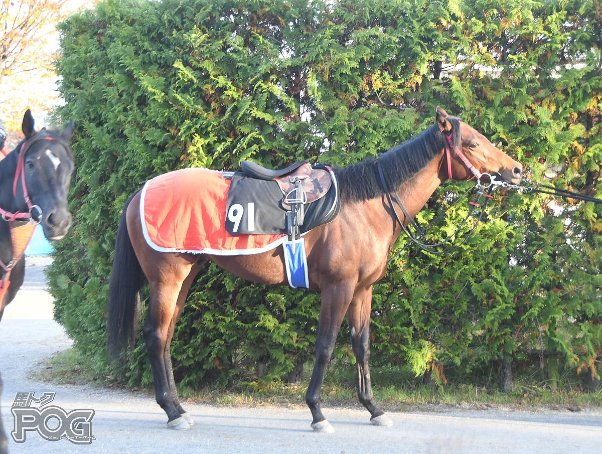 アンナベルガイトの馬体写真