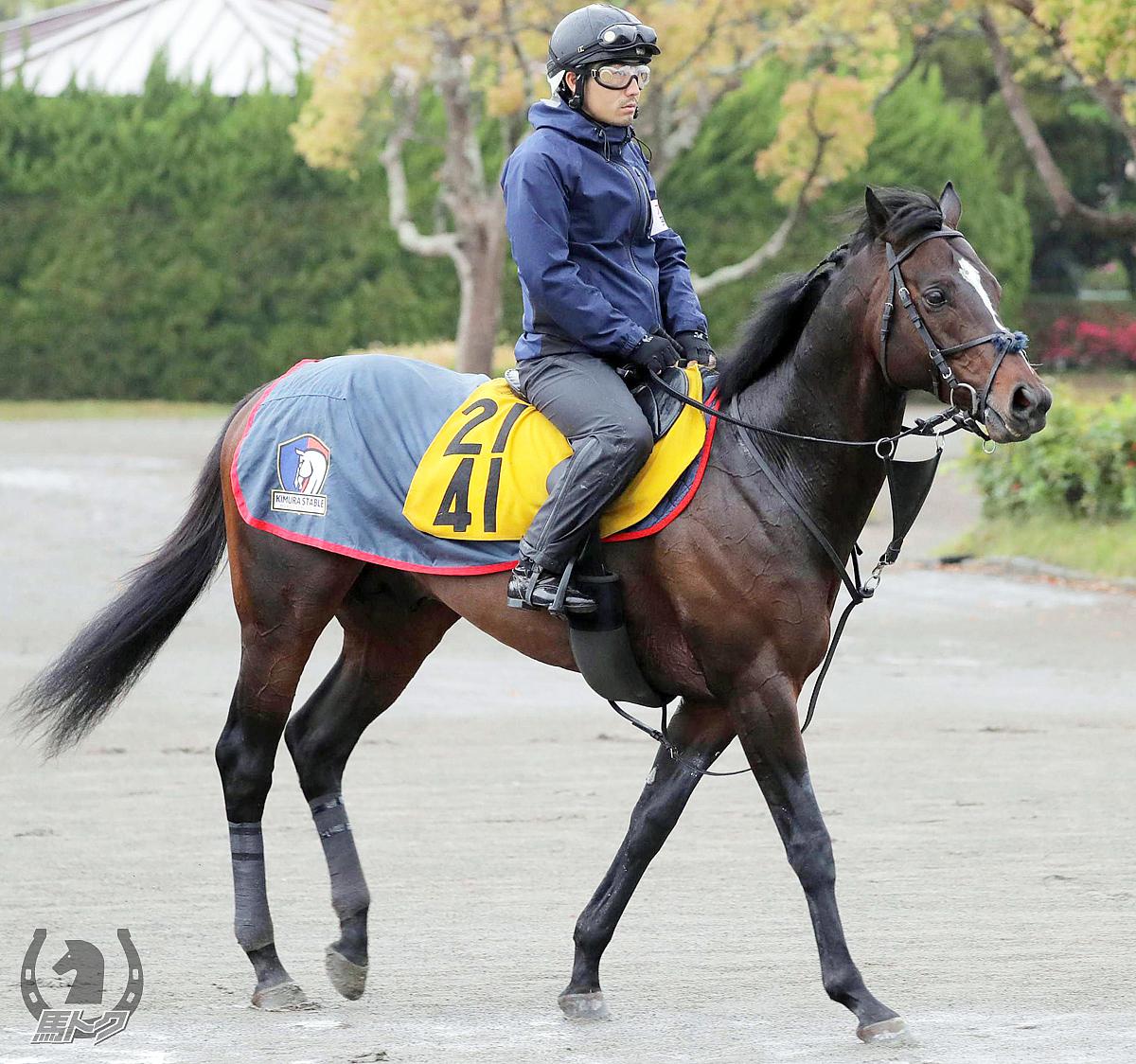 ロシュフォールの馬体写真