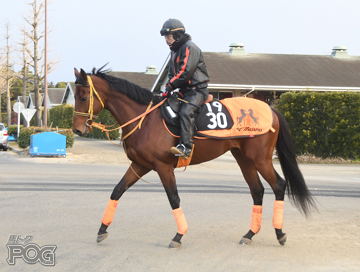 オーサムミッションの馬体写真
