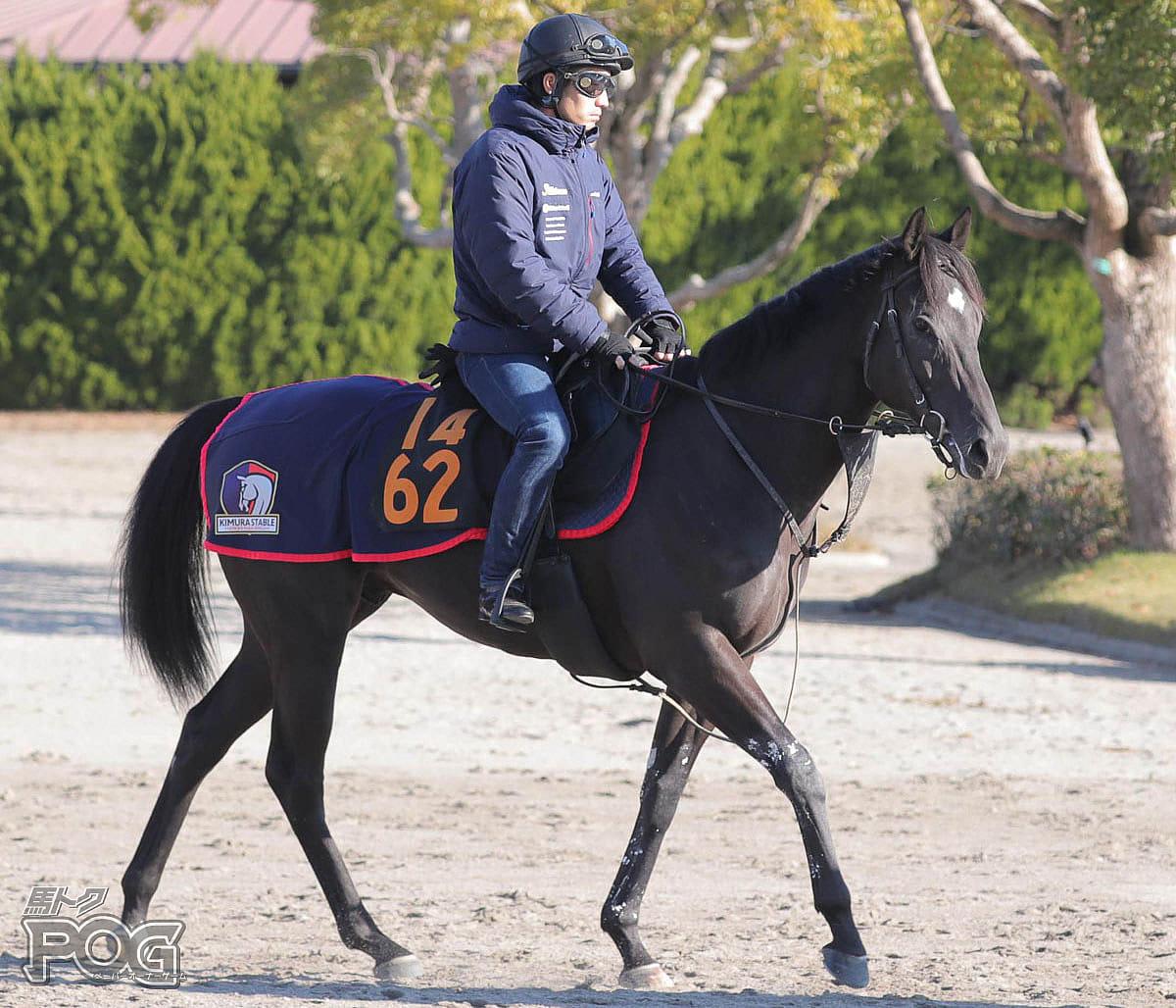 フレッチアの馬体写真