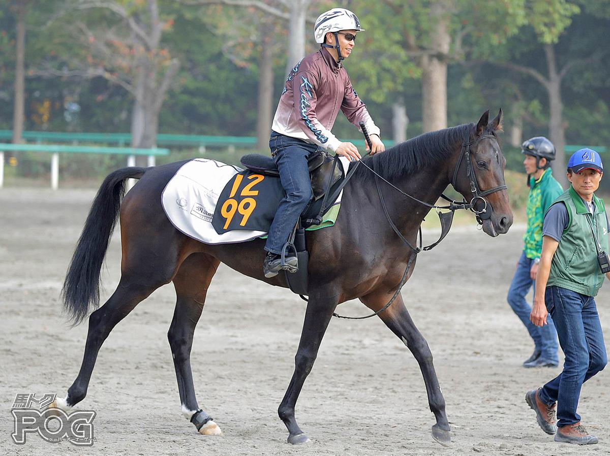 ライレローズの馬体写真