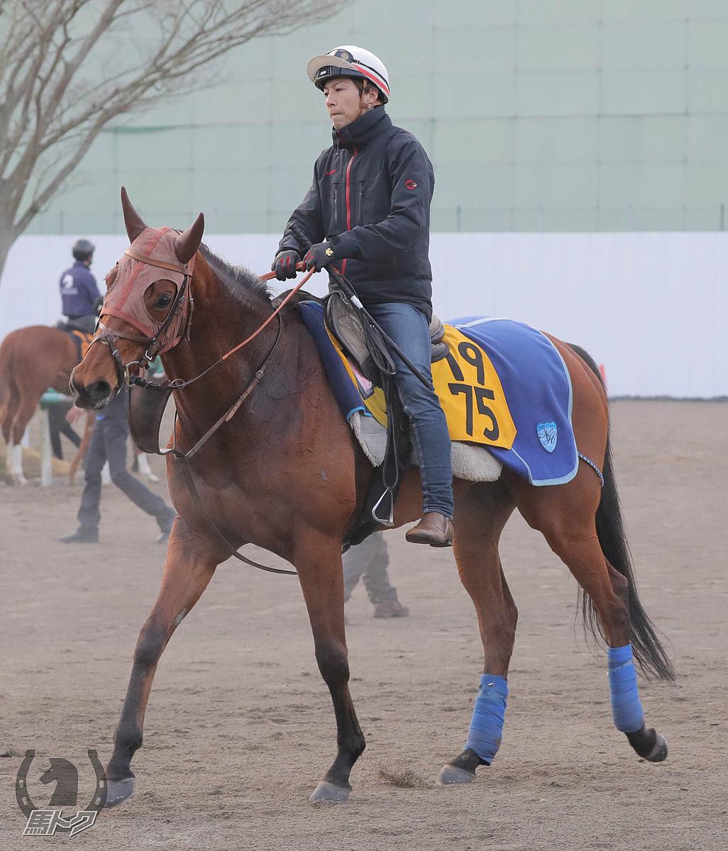 リリーバレロの馬体写真