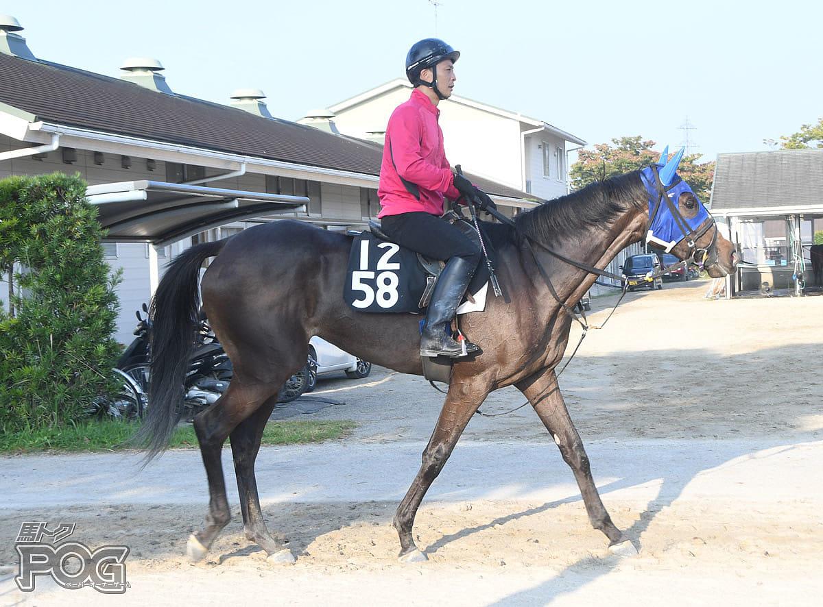 クルスブランカの馬体写真