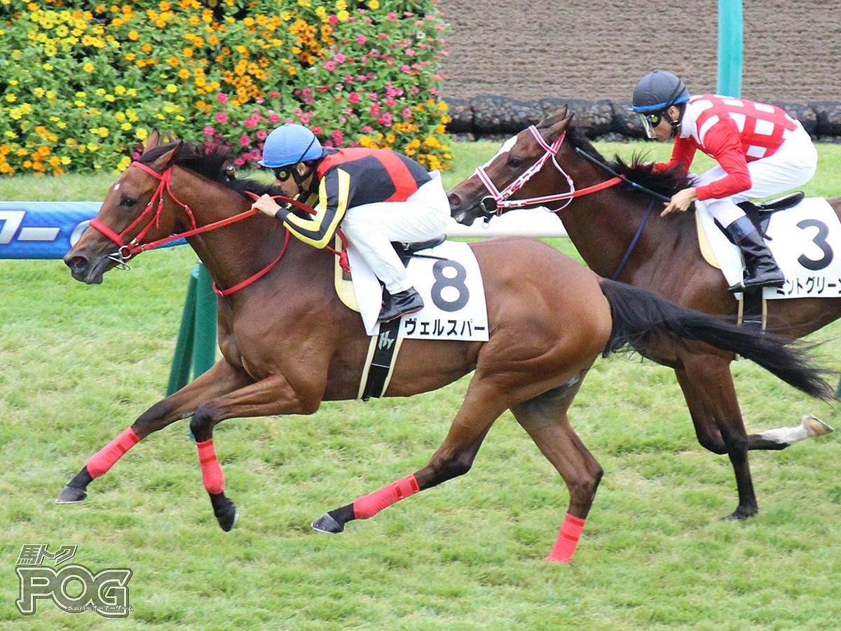 ヴェルスパーの馬体写真