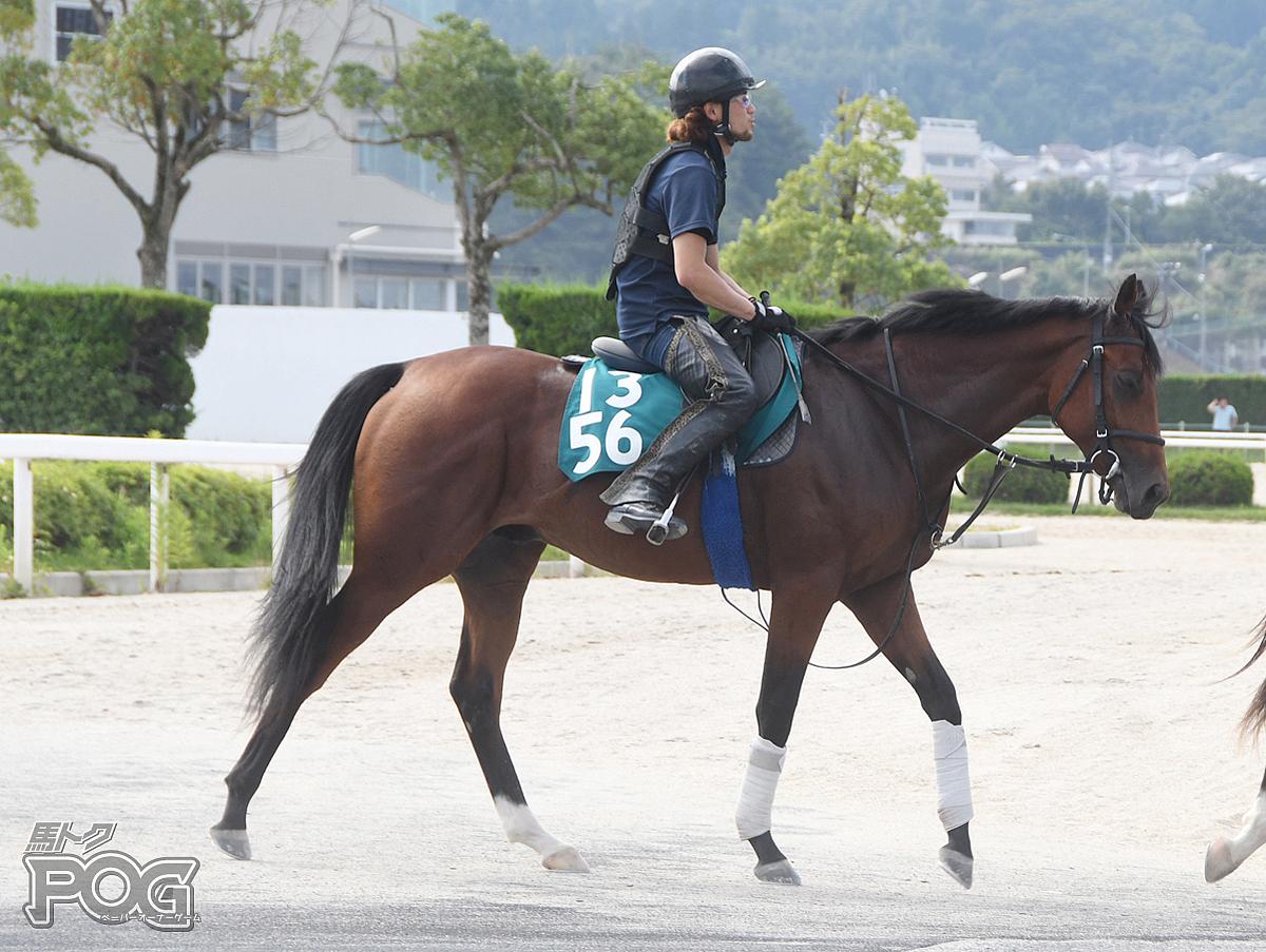 ルベライトの馬体写真