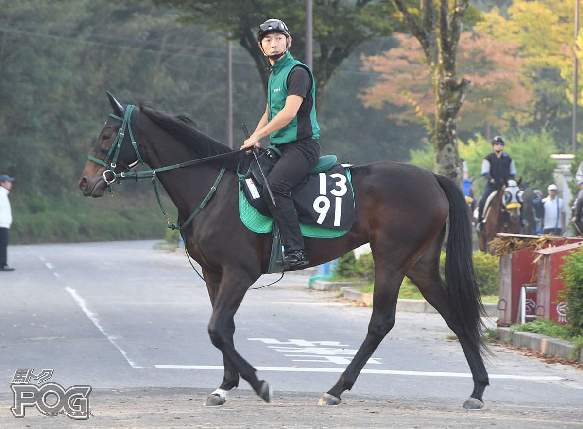 ハナソメイの馬体写真