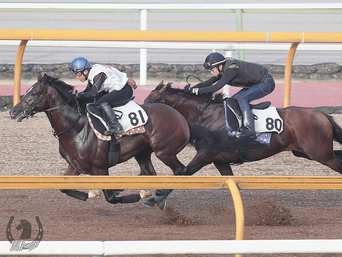 アドマイヤアルバの馬体写真