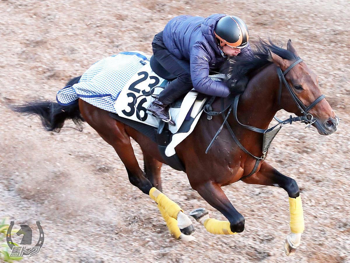 レッドヴェイロンの馬体写真