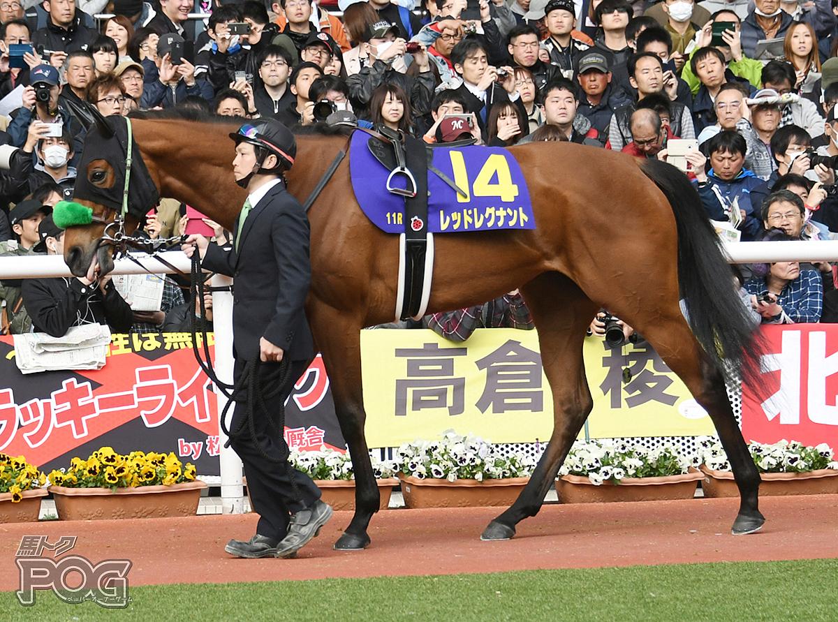 レッドレグナントの馬体写真
