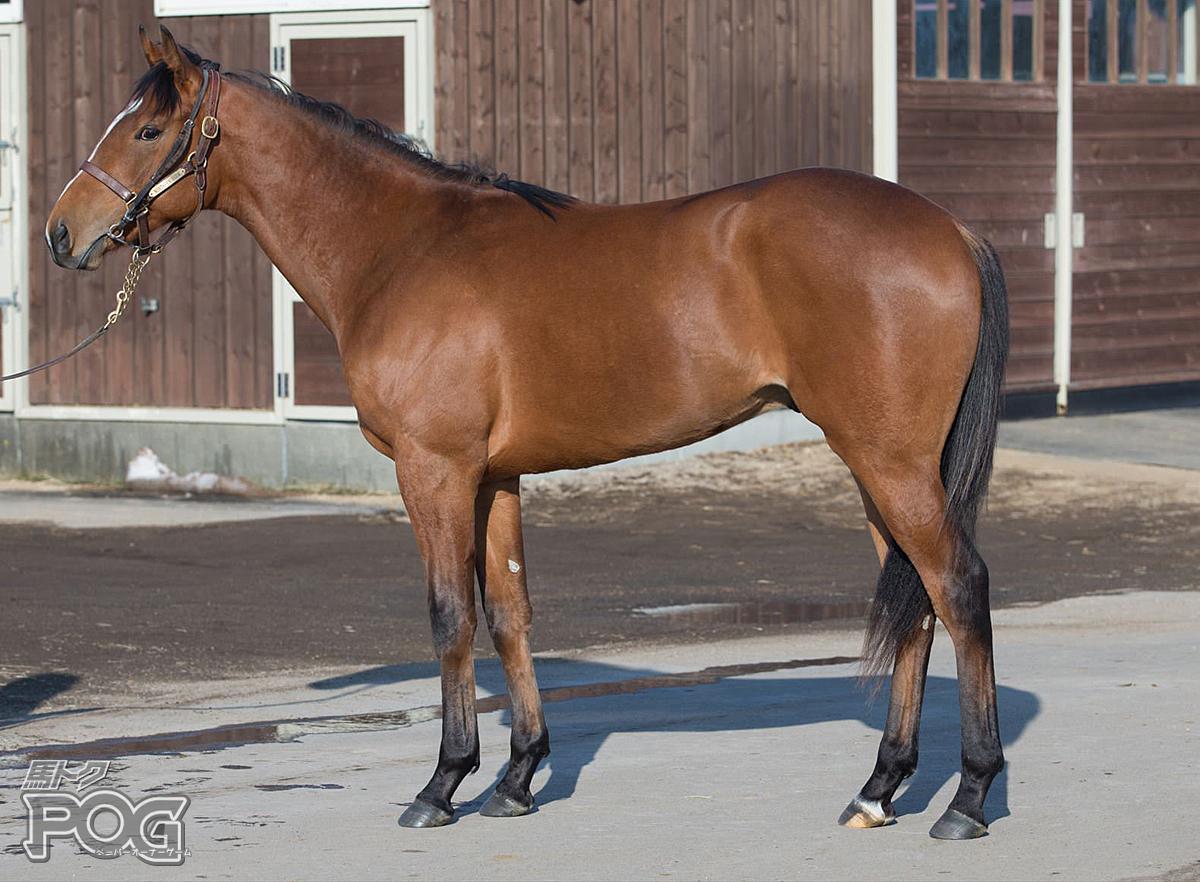ボウルオブチェリーの馬体写真