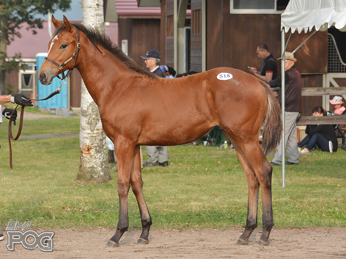 アンバービーチの馬体写真