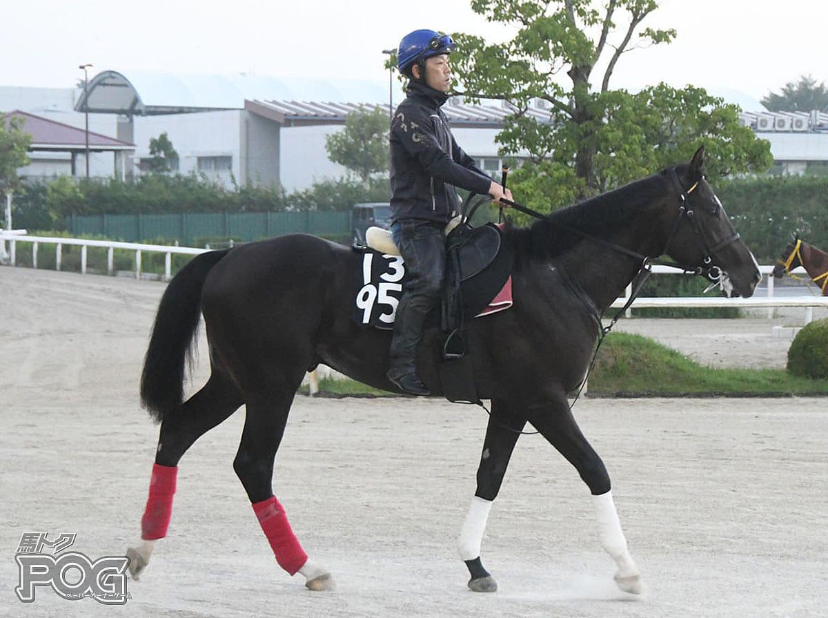 クナルゲニアールの馬体写真