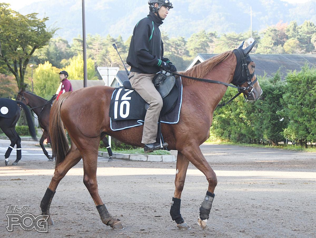 マダムジェニファーの馬体写真