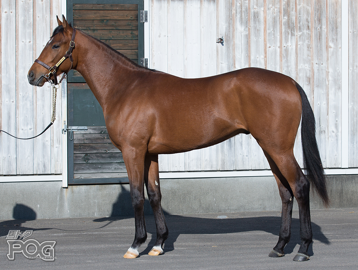 ギャラッドの馬体写真