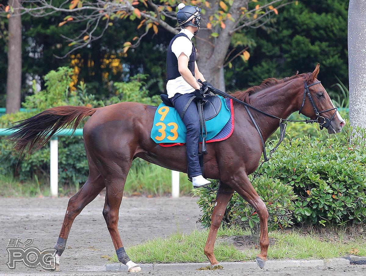 デュッセルドルフの馬体写真