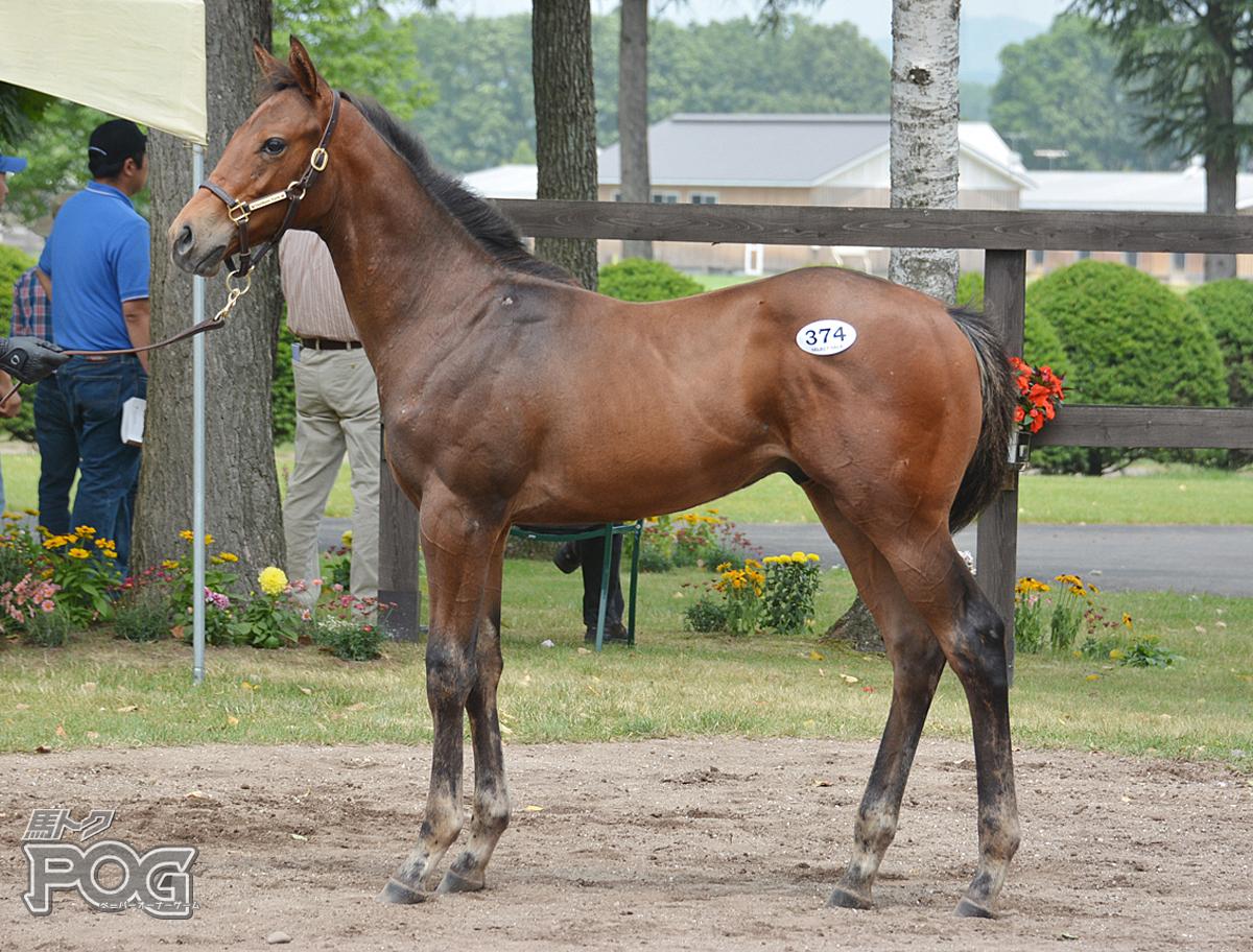 アンヴァンシブルの馬体写真