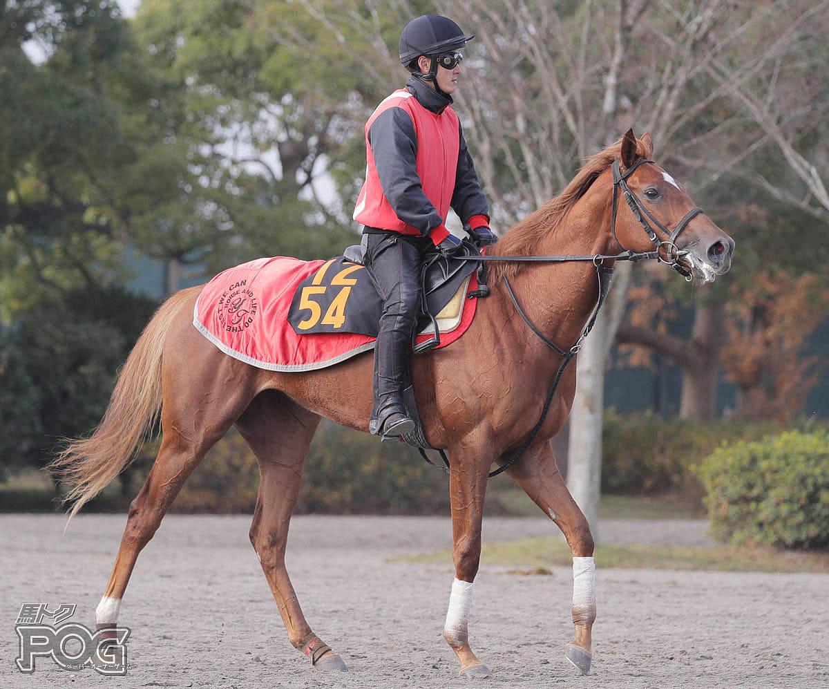 メジャーラプソディの馬体写真