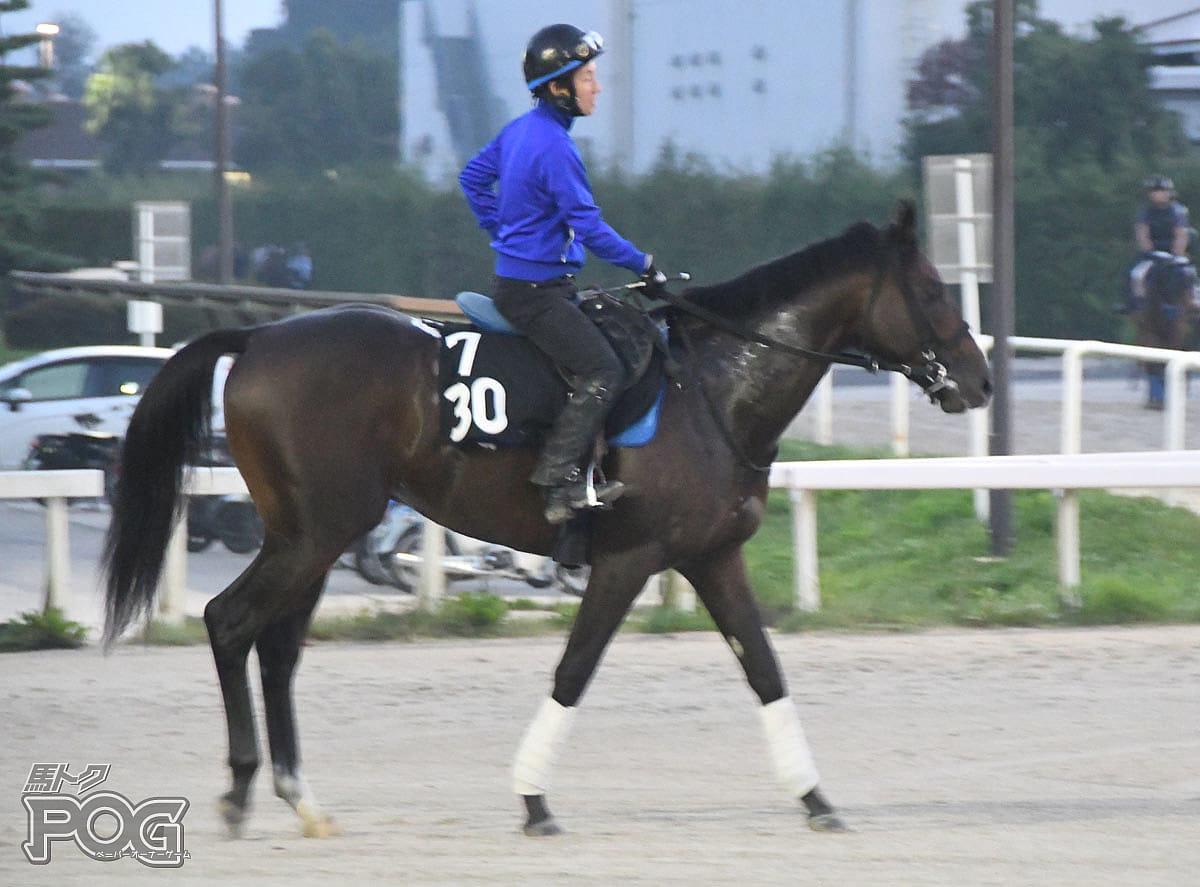 トーセンブレイヴの馬体写真