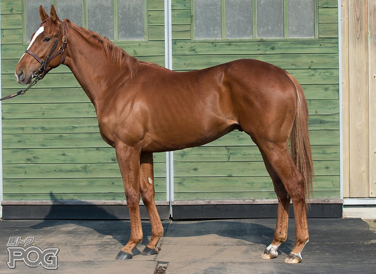 アランブレラの馬体写真