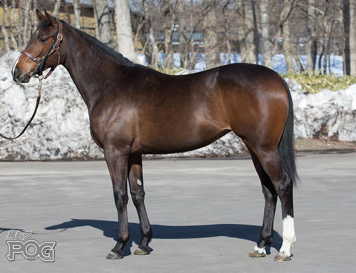 リヴォルノの馬体写真