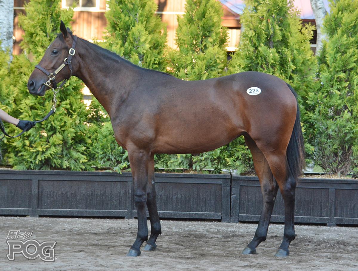 ラインアストリアの馬体写真