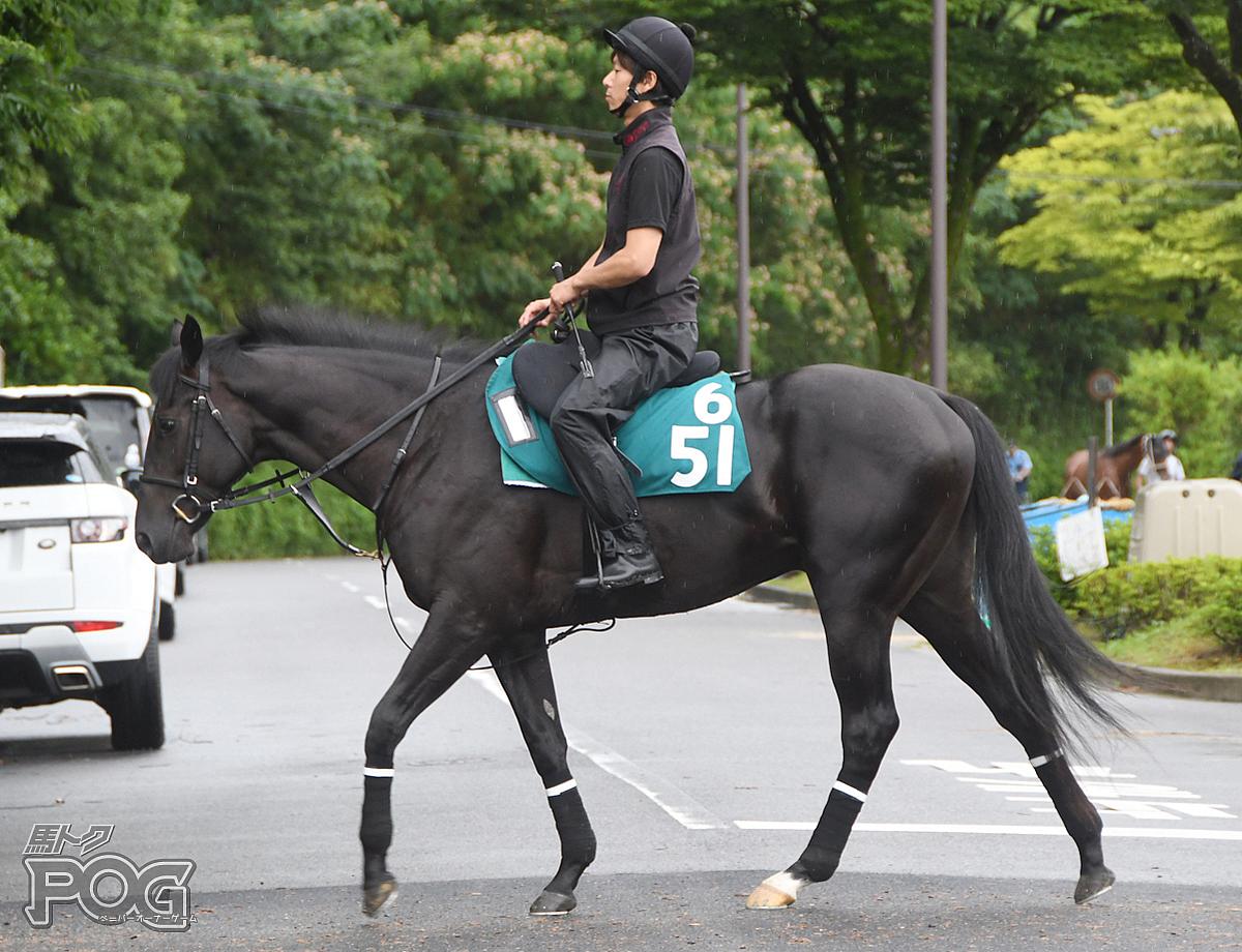 フォックスクリークの馬体写真
